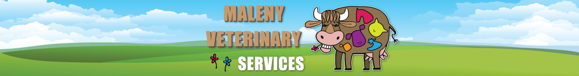 Maleny Veterinary Services